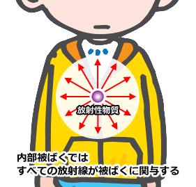 内部被ばくに関与する放射線